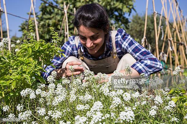 happy woman working on farm, examining flowers - yarrow stock pictures, royalty-free photos & images