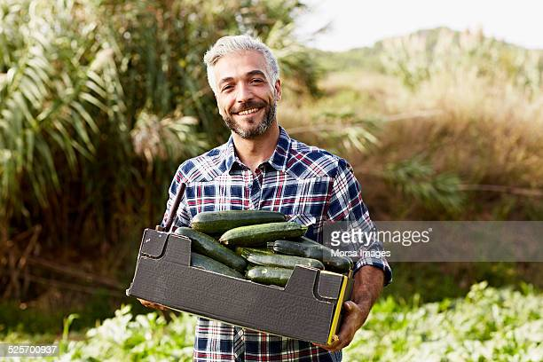 Happy worker carrying cucumber box at organic farm