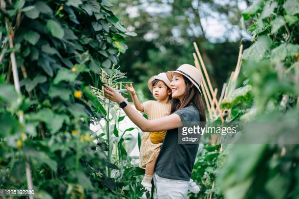 happy young asian family experiencing agriculture in an organic farm. mother teaching little daughter to learn to respect the mother nature - sustainability stock pictures, royalty-free photos & images