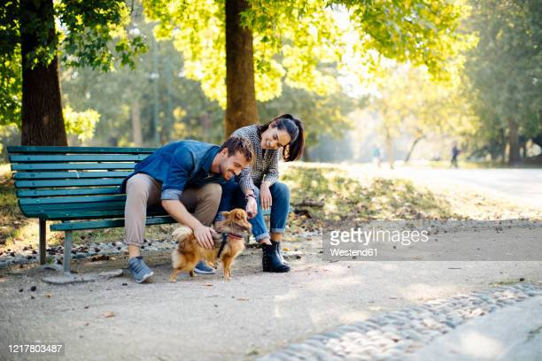happy young couple with dog in a park sitting on a bench - belgium stock pictures, royalty-free photos & images