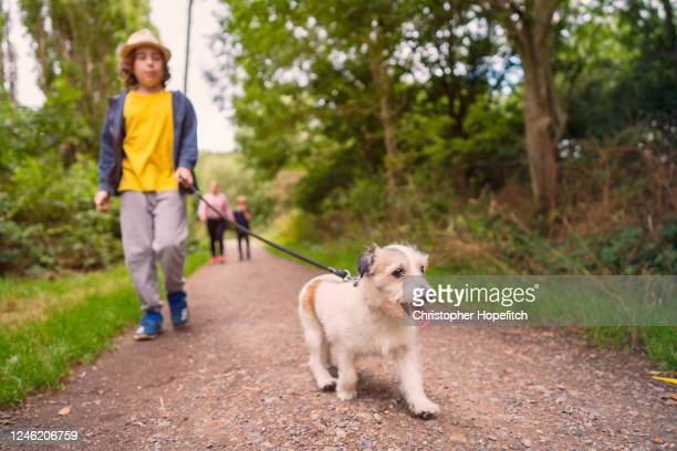 happy young dog leading the way on a walk in a park - public park stock pictures, royalty-free photos & images