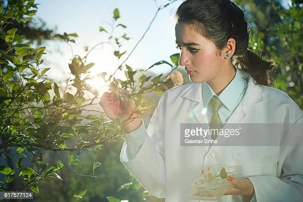 happy young female botanist collecting sample of leafs. - wissenschaftlerin stock-fotos und bilder