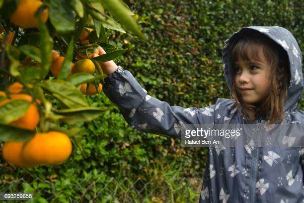 Happy young girl picking fruit