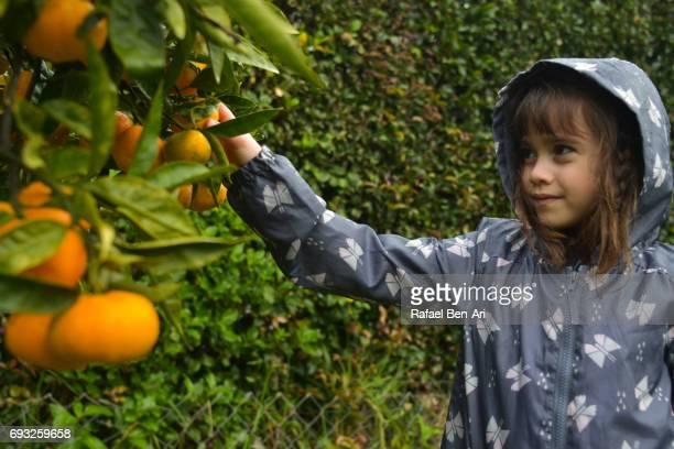 happy young girl picking fruit - rafael ben ari stock-fotos und bilder