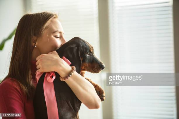 happy young woman kissing and cuddling her adorable doberman puppy - dog knotted in woman stock pictures, royalty-free photos & images