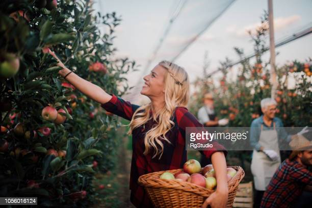 Happy young woman picking fruit