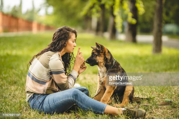 happy young woman playing with her dog on the grass in park - obedience training stock pictures, royalty-free photos & images
