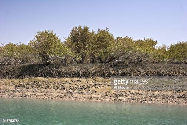 hara forest - soil erosion stock photos and pictures