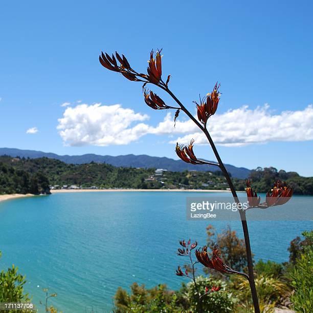 Harakeke in bloom, Distant Kaiteriteri, NZ