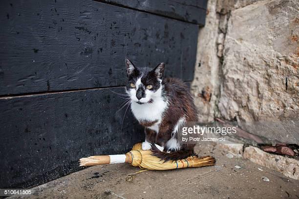 Harbor cat