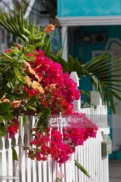harbour island, bahamas, flowers - ダンモアタウン ストックフォトと画像