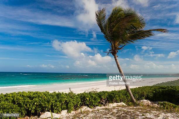 harbour island, bahamas, pink sands beach - ダンモアタウン ストックフォトと画像