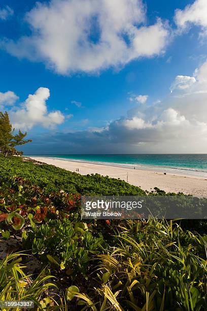 Harbour Island, Bahamas, Pink Sands Beach