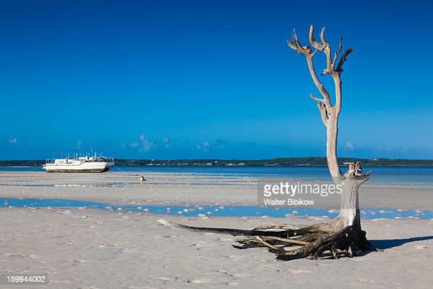 harbour island, bahamas, tree - ダンモアタウン ストックフォトと画像