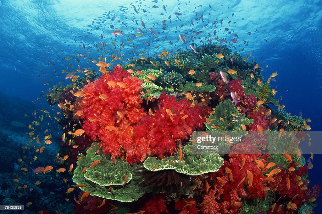 Hard and soft corals with tropical fish in the South Pacific : Stockfoto