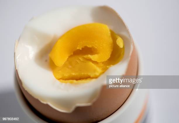 A hard boiled is standing in Munich 3 August 2017 The scandal on eggs from the Netherlands being contaminated with Fipronil is building up Photo Sven...