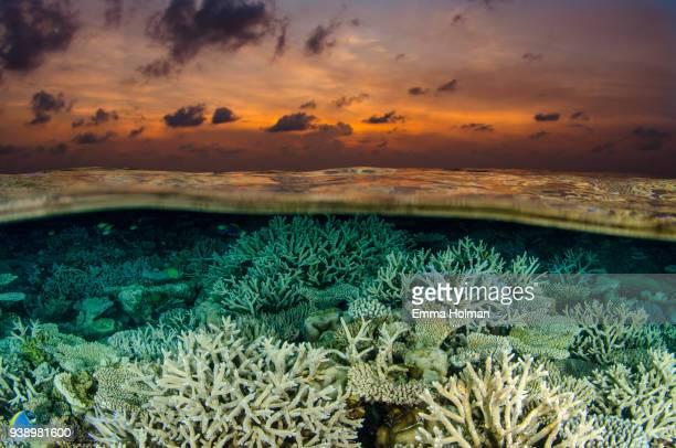 Hard Coral at Sunset