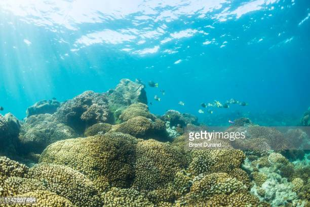 hard coral reef in la paz - sea of cortez stock pictures, royalty-free photos & images