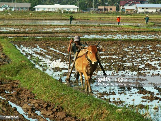 hard work plowing - get your hoe ready stock pictures, royalty-free photos & images