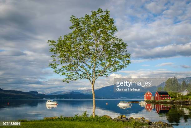 hardangerfjord tree - gunnar helliesen stock pictures, royalty-free photos & images