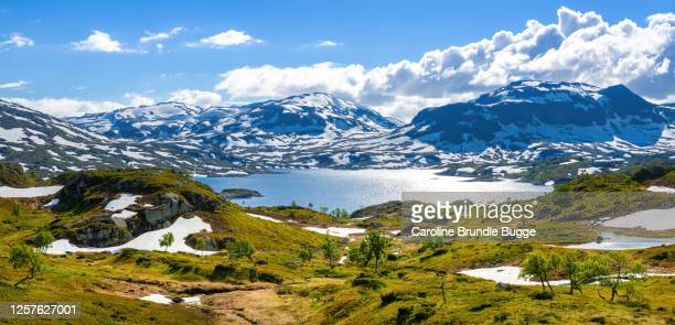 hardangervidda national park, norway - norwegian culture stock pictures, royalty-free photos & images