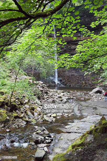 hardrew force waterfall - heidi coppock beard stock pictures, royalty-free photos & images
