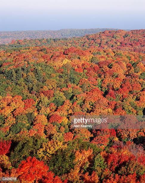 hardwood forest, autumn, high angle view - parque estatal de porcupine mountains wilderness fotografías e imágenes de stock