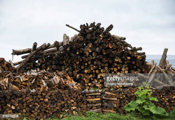 Hardwood logs lie stacked in a pile ready for cutting and splitting for firewood June 23 2017 on land owned by Robert Marble in Charlotte Vermont...