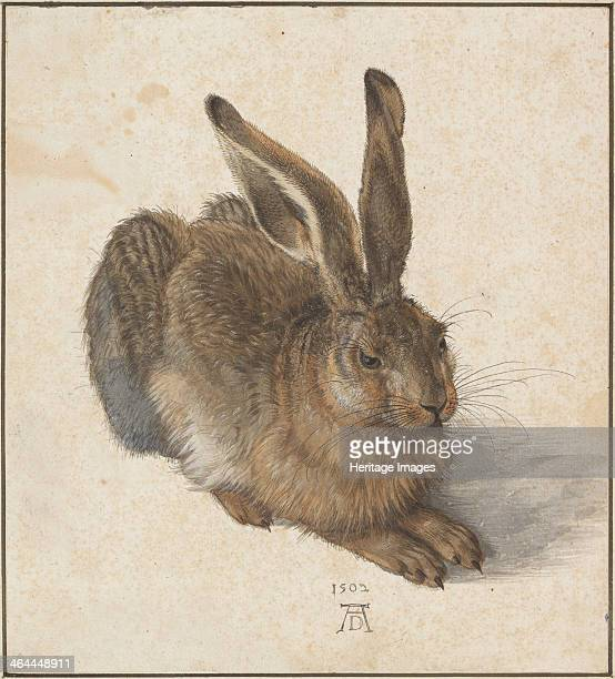 Hare 1502 Found in the collection of the Albertina Vienna