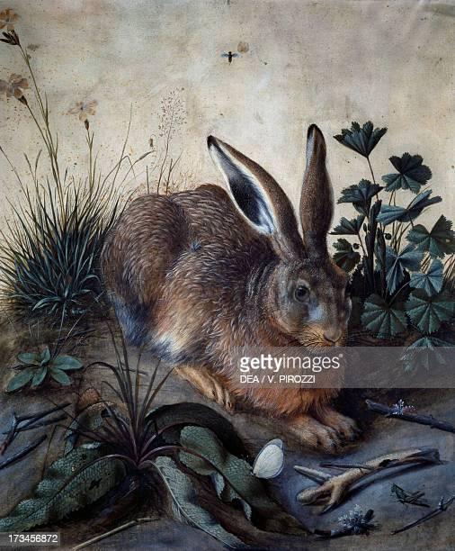 Hare by Hans Hoffmann Germany 16th century Rome Galleria Nazionale D'Arte Antica Di Palazzo Corsini