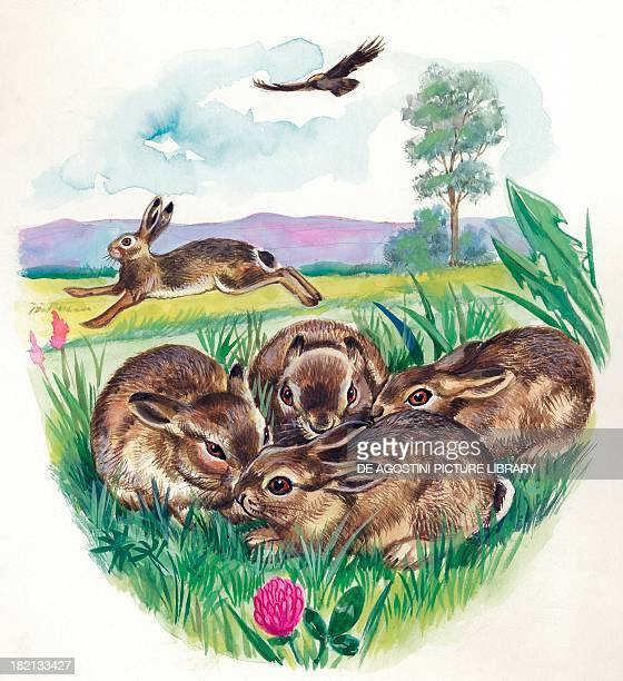 Hare defending its young from being attack by a bird of prey illustration