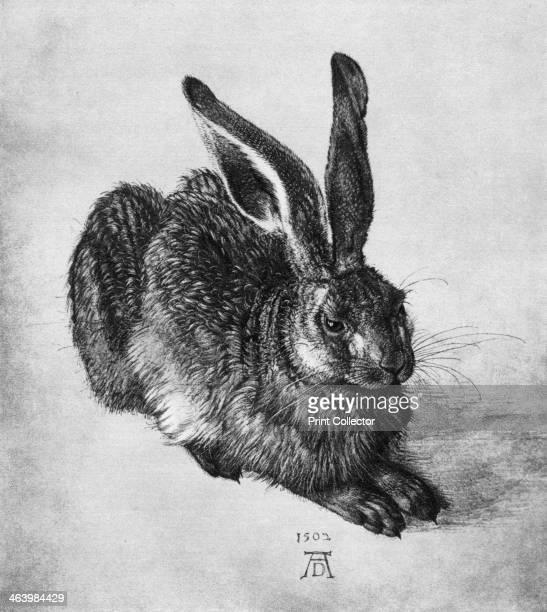 'Hare' Found in the collection of the Graphische Sammlung Albertina Vienna Austria A print from Durer Und Seine Zeit by Wilhelm Waetzoldt Grosse...
