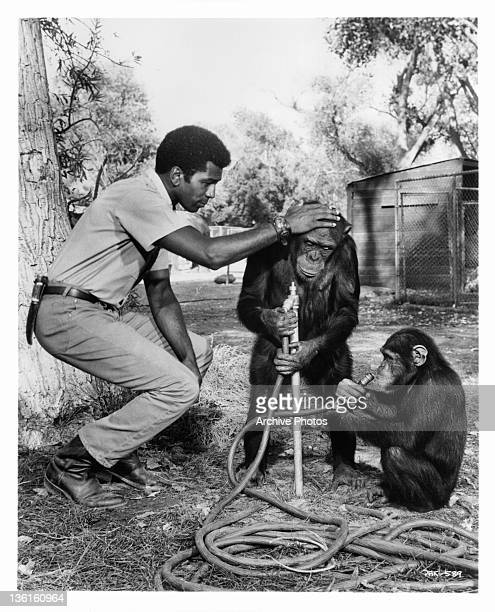Hari Rhodes cautions chimps against wasting any water in a scene from the television series 'Daktari' 1966