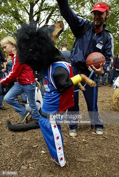Harley a rottweilerGerman shepherd mix stands tall while dressed as one of the Harlem Globetrotters in Tompkins Square Park for the Dog Halloween...