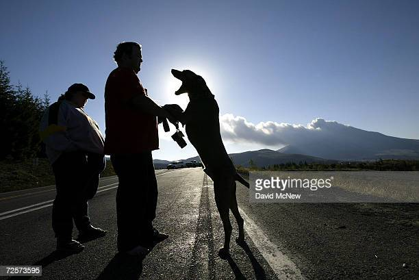 Harley communicates with his master, Brian McColl of Chino, California, as ash and steam erupt from Mount St. Helens volcano October 5, 2004 at Mount...