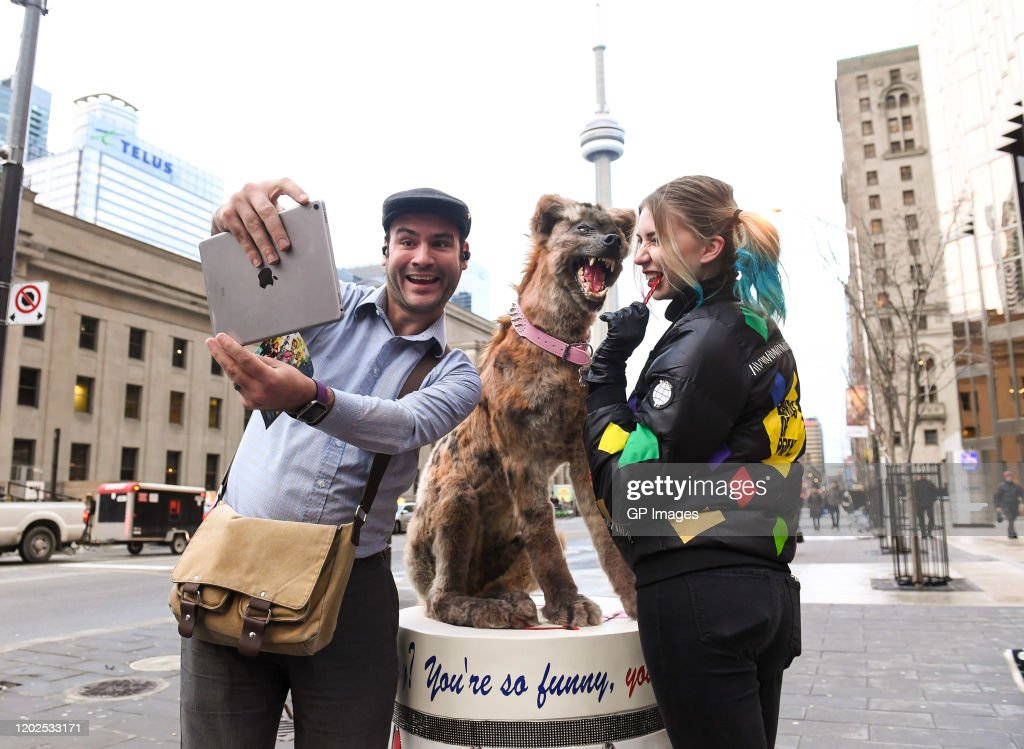 Harley Quinn S Pet Hyena Brings Colourful Mayhem To Toronto Commuters News Photo Getty Images