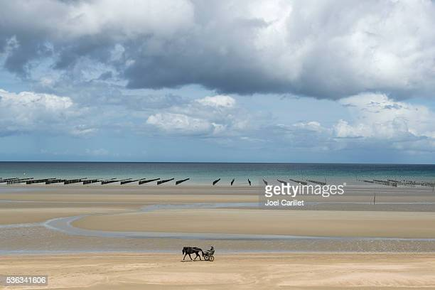 harness racer and horse training on utah beach, normandy, france - utah beach stock photos and pictures