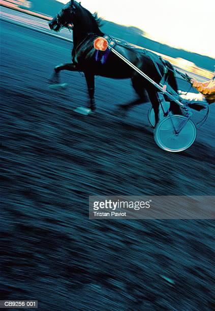 Harness racer at full tilt (Digital Enhancement)
