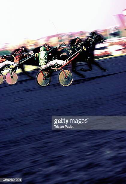Harness racers in action (Digital Enhancement)