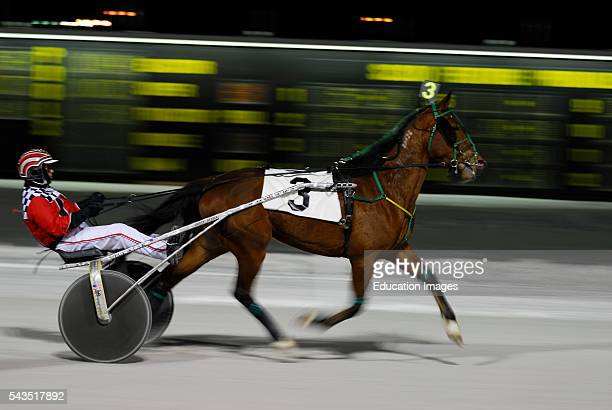 Harness racing pacer at finish line ahead of the pack