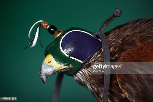 Harris Hawk with its hood on is pictured on centre court where it is used to scare away pigeons ahead of play on day four of the Wimbledon Lawn...