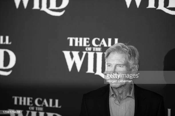 """Harrison Ford arrives at the premiere of 20th Century Studios' """"The Call Of The Wild"""" at El Capitan Theatre on February 13, 2020 in Los Angeles,..."""