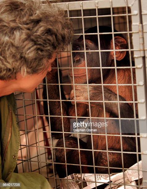 Harry, a 9 year–old chimp is comforted by his trainer Jeff Lee as he sits in a kennel in the back of a van waiting to take him to safe location....