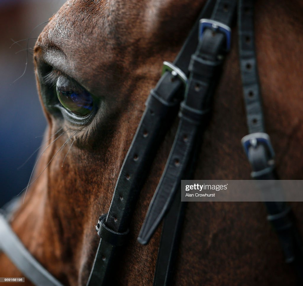 Harry Angel after winning The Duke of York Clipper Logistics Stakes at York Racecourse on May 16, 2018 in York, United Kingdom.
