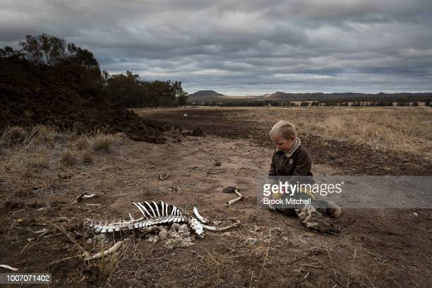 Harry Taylor plays with the bones of dead livestock on the Taylor family farm The Central Western region of New South Wales Australia farmers...