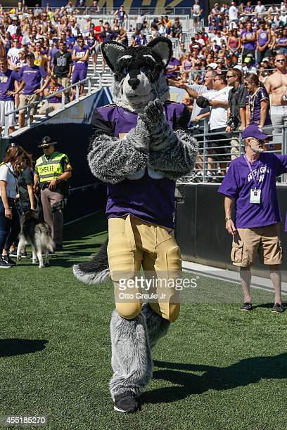 Harry the mascot of the Washington Huskies roams the sidelines during the game against the Eastern Washington Eagles on September 6 2014 at Husky...