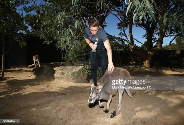 Harry Wilson interacts with a kangaroo during a Liverpool FC player visit to Taronga Zoo on May 25 2017 in Sydney Australia