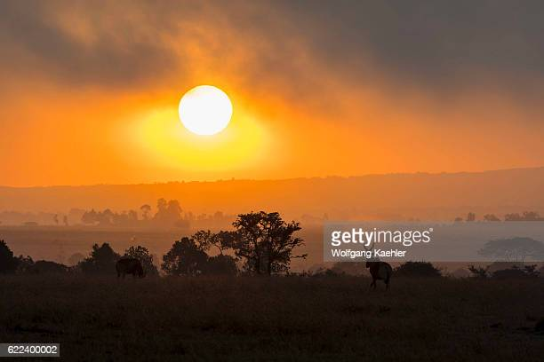 Hartebeests silhouetted at sunrise at the Ol Pejeta Conservancy in Kenya