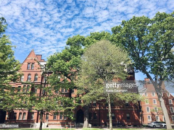 harvard yard and harvard university - ivy league university stock photos and pictures