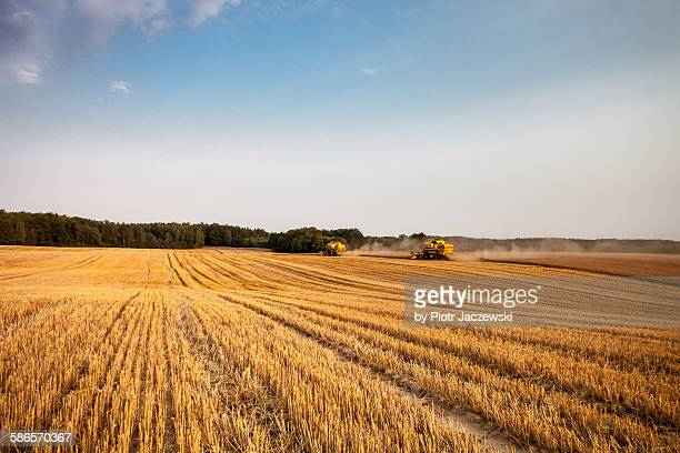 Harvest afternoon